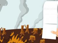 Klopapierrolle vor abgebrannten Baumstümpfen